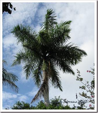 07-18-palm