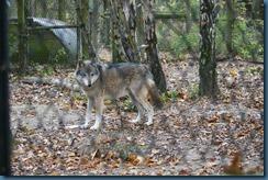 2011-11-28 Wildwood 103