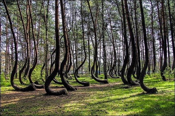 اشجار غريبة