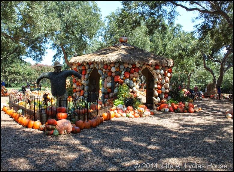 Dallas Arboretum - pumpkin festival-pumpkin village 2