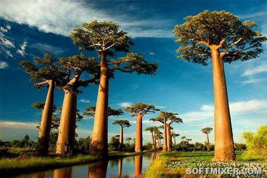 1369164590_trees03
