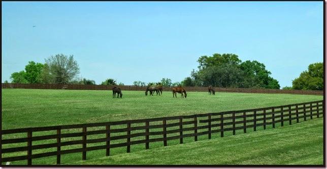 horsesIMG_2953