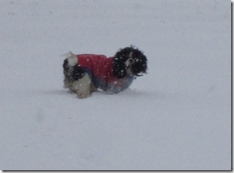 Maisie having fun in the snow 004 (1024x756)