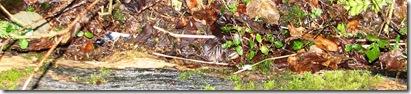 20130214 Metre (3) ivy seedlings