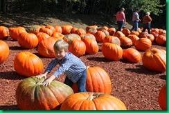 MJ pumpkin