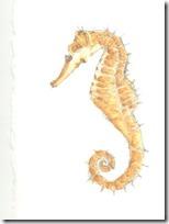 peces clipart blogcolorear (11)