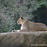 Safaripark_130527-058.JPG