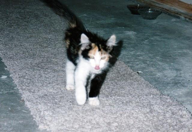 jessica baby cat
