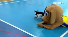Кот-баскетболист