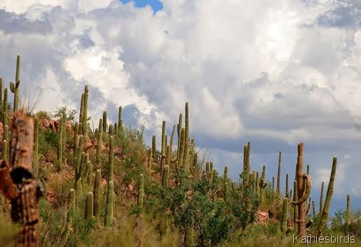 6. cactus clouds-kab