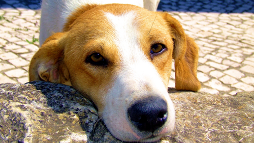 orphan dog