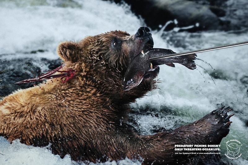 Harpoon bear