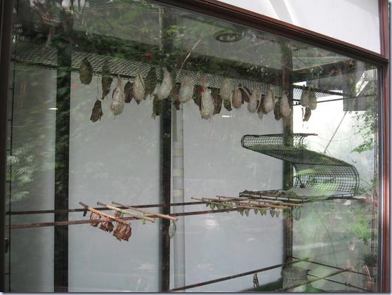 Farfalle 106