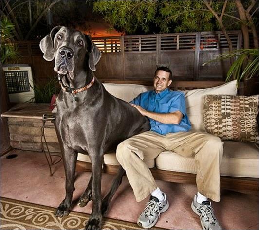 big_dog_520