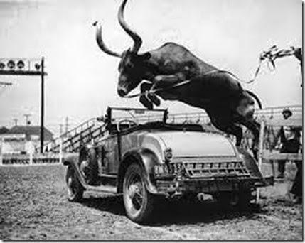 car-bull-431
