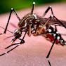 Cara Mengenali & Mencegah Aedes Dan Denggi