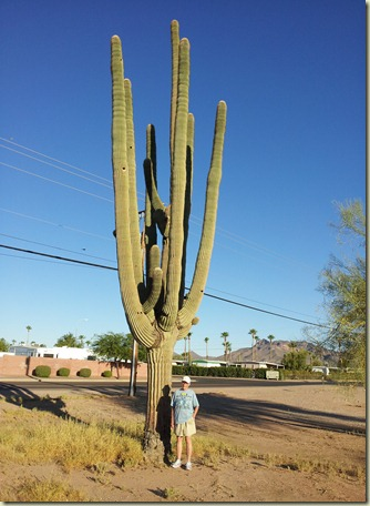 Lrg Saguaro Rockey Apache Junction