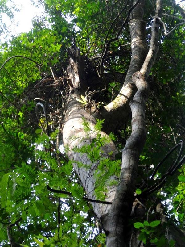 Forêt équatoriale (1)