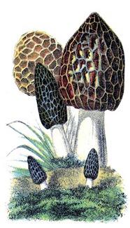 Mushrooms-Vintage-GraphicsFairy2