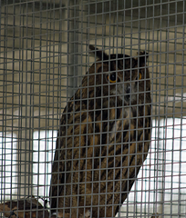 Owl Exotic Game Farm Spring