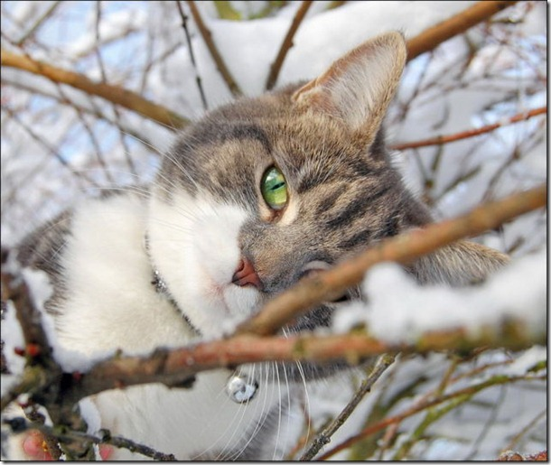 cats-play-snow-6
