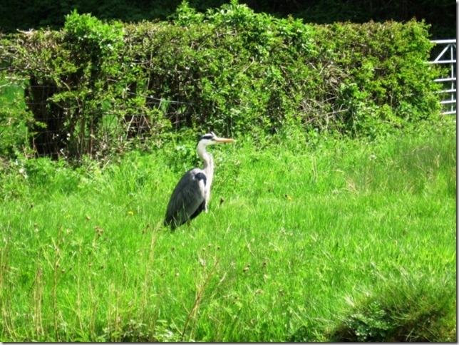 a stork in wait