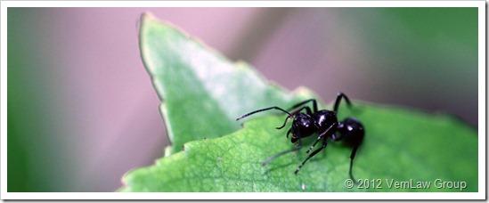 Ant_Black_1_41112_IMG_0695