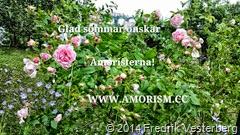 bm-image-765694 sommarbild med rosa rosor blå blommor med amorism