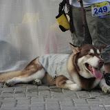 Pet Express Doggie Run 2012 Philippines. Jpg (255).JPG