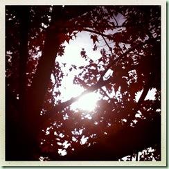 Fall2012_2