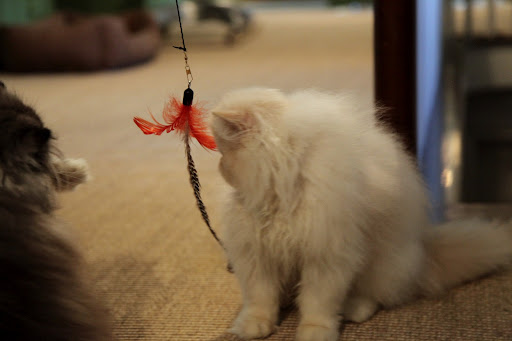 Wait a minute, Ch'in...we've been fooled!  It's just a feather on a string!