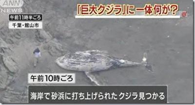 chiba_kujira_20120507