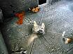12-komnata_upadłych_05.jpg