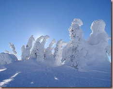 Big-White-snow-ghosts-with-sun-tree-covered-in-snow-2