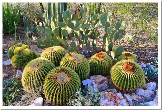 131203_TucsonBotanicalGarden_115