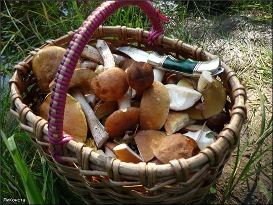 Корзина_грибов