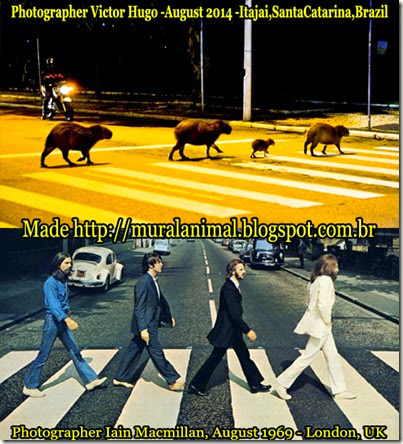 capybara-cover-beatles