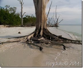 Lovers Lane SP FL 017