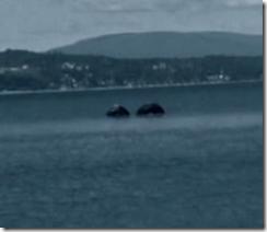 По следам мифических чудовищ: Морской монстр [National Geographic]