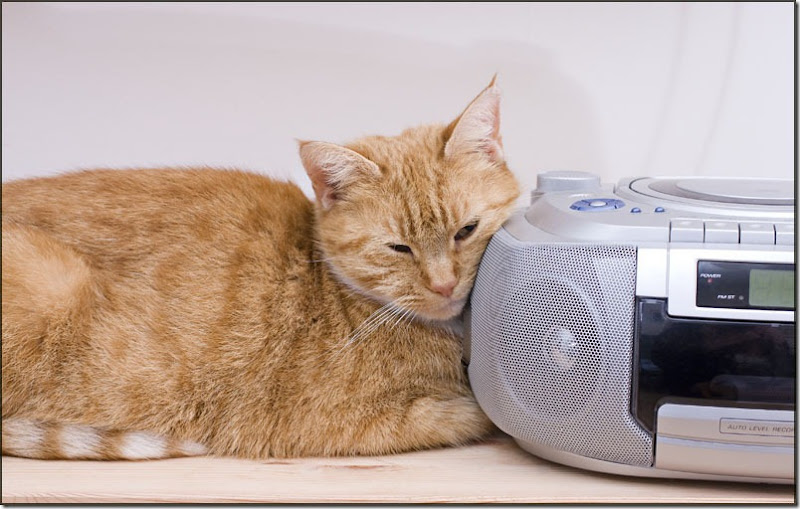 Ginger cat listening to the radio