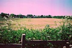 Summer-Fields-8---XPRO