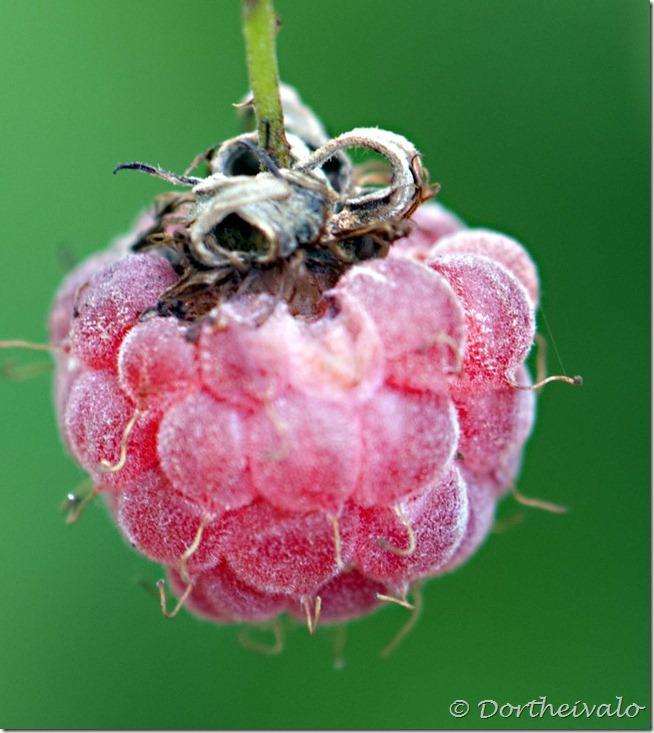 endnuethindbær