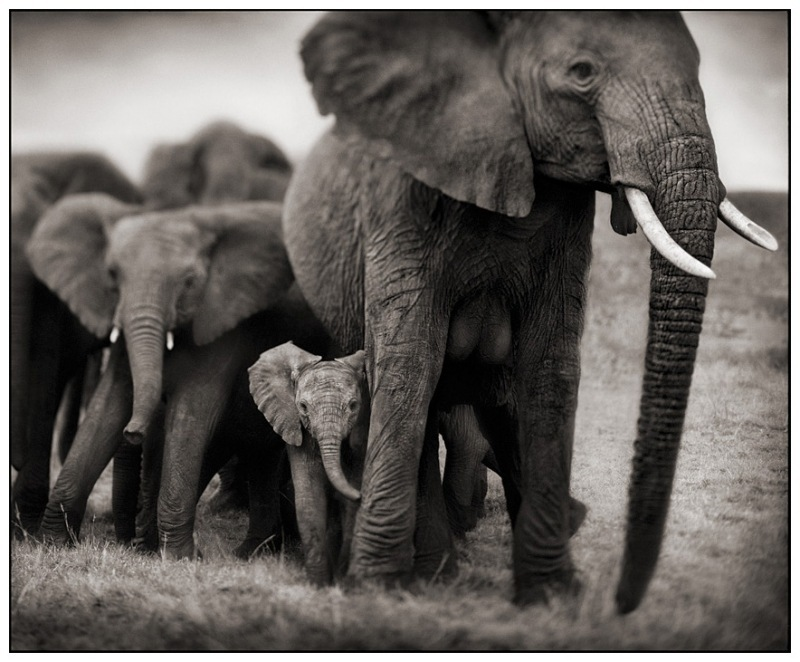 17 Elephant Mother & Two Babies