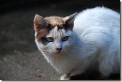 gato DSC_052115