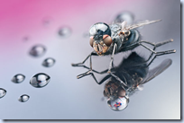 Insects with Drops of Water On Their Heads