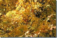 2014-10-19 2014-10-19 001 130