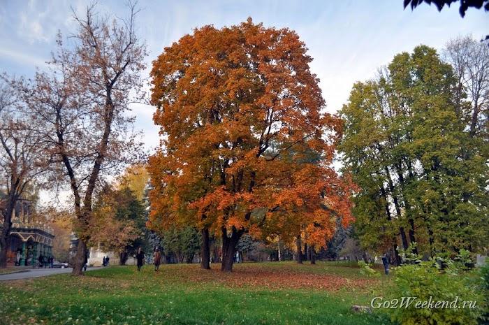 Botanicheskiy_sad_moskva_36.jpg