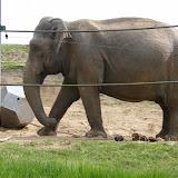 17.04.2011 Ausflug Zoo Neunkirchen am 16.04.2011