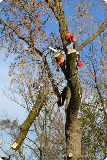 treetrimming_branch_athomewithh