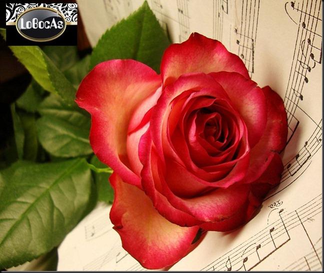 Flores2012-01LOBocAs